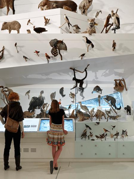 راهنمای موزه