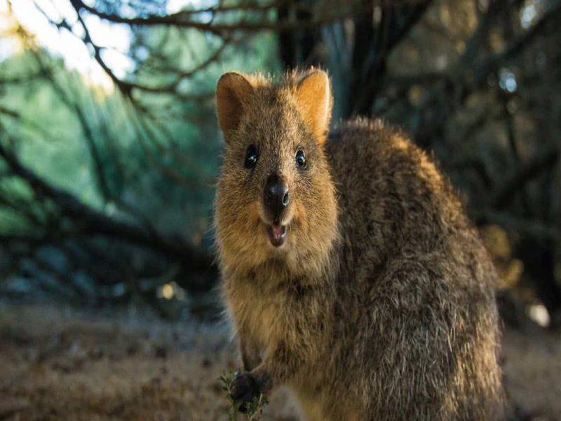 دانلود فایل پاورپوینت حیوانات در حال انقراض