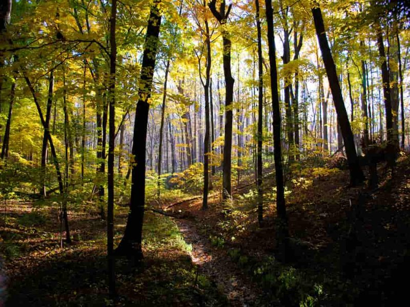 دانلود فایل ورد و پاورپوینت جنگل ها