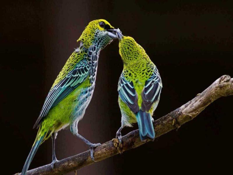 آشنایی با گونه پرندگان ایران